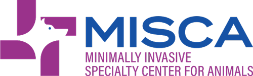 Minimally Invasive Specialty Center for Animals