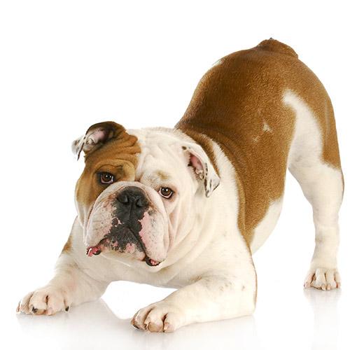 Dog Owner Information Image